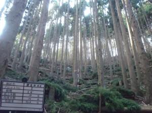 施工地:一関市千厩町磐清水字峰山